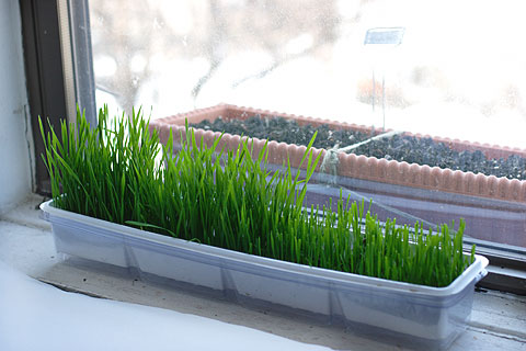 16wheatgarden.jpg
