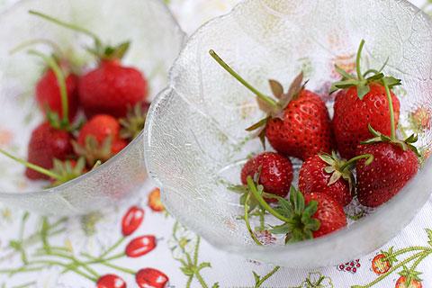 自家製栽培オーガニックイチゴ