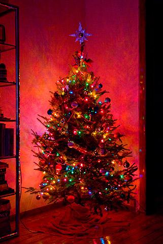 うちのクリスマスツリー点灯