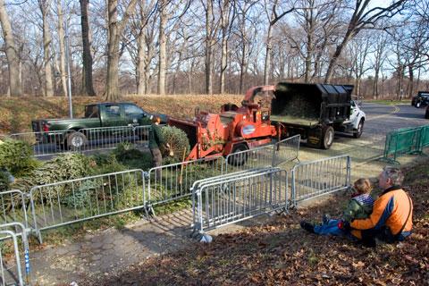 クリスマスツリーのリサイクル