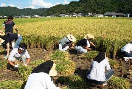 稲刈り2008.jpg